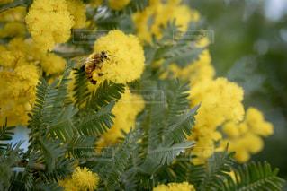 近くの花のアップの写真・画像素材[1826068]