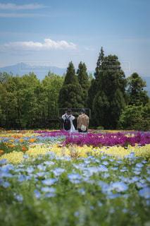 2人,空,花畑,屋外,青空,後ろ姿,人物,人,ネモフィラ,友達,くじゅう花公園