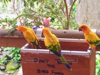 鳥,カラフル,黄色,仲良し,小鳥,yellow,三羽,yellow birds