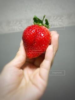 赤,手,いちご,苺,大きい,おいしい,新鮮,フレッシュ,ぶつぶつ,ヘタ,粒