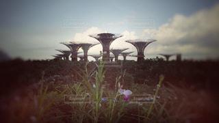 花,木々,樹木,旅行,シンガポール,植物園,家族旅行