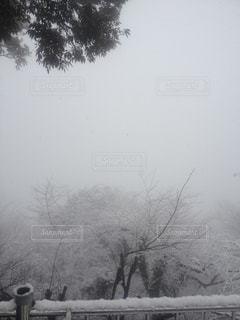 自然,風景,雪,山