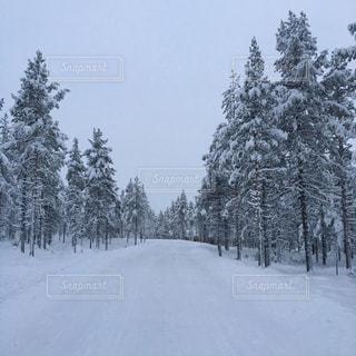 冬,雪,森,雪原