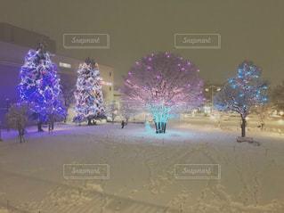 冬,夜,雪,白,雪景色,光,イルミネーション,クリスマス,寒い,デート,聖なる夜