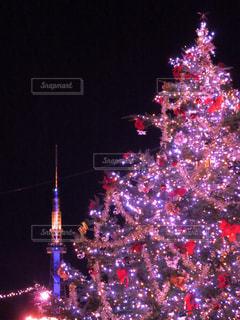 夜ライトアップされたクリスマス ツリーの写真・画像素材[1681779]