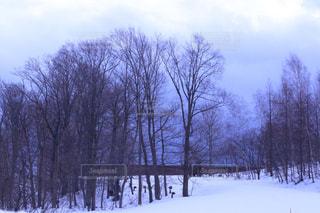 雪に覆われた斜面をスキーに乗る男の写真・画像素材[1744478]