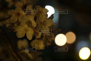 近くの花のアップの写真・画像素材[1880044]