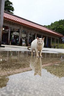 建物の前に立っている猫の写真・画像素材[2174085]
