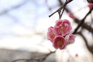 花のクローズアップの写真・画像素材[3020711]