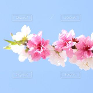 花のクローズアップの写真・画像素材[3038150]