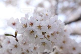 花のクローズアップの写真・画像素材[3038152]