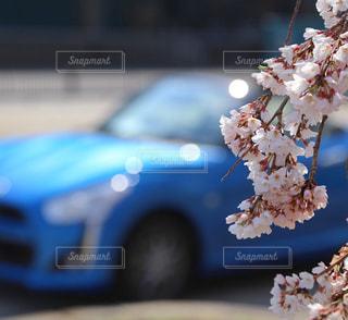 春,桜,木,ピンク,青,車,花見,お花見,イベント,デート,ドライブ,車両,さくら