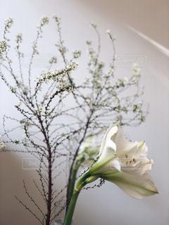 紫の花で満ちている白い花瓶の写真・画像素材[1672552]