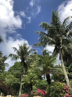 海,空,南国,青空,ヤシの木,リゾート,海外旅行
