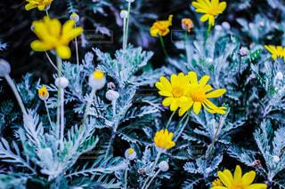 花,フラワー,黄色,花びら,元気,きいろ