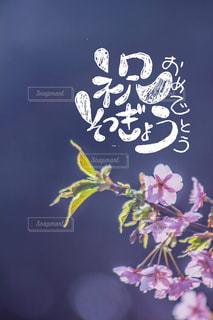 「手書き」,「文字」,「手書き文字」,「日本語」,「卒業」,「おめでとう」