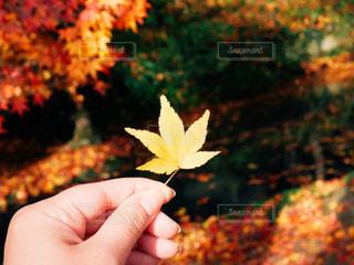 秋,紅葉,黄色,景色,イエロー,黄,yellow,フォトジェニック,インスタ映え