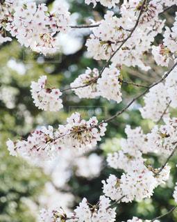近くの花のアップの写真・画像素材[1833285]