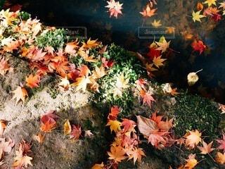 秋の訪れの写真・画像素材[3805399]