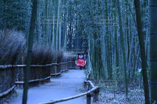 京都嵐山の竹林小径の写真・画像素材[1678051]