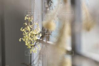 花のクローズアップの写真・画像素材[2141596]