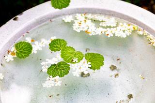 水に浮かぶ花の写真・画像素材[2141682]