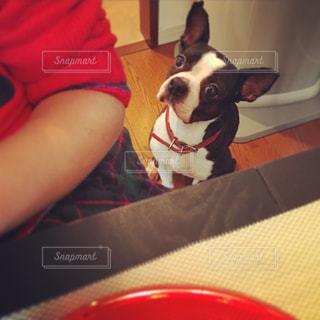 愛犬と愛娘の写真・画像素材[2042972]