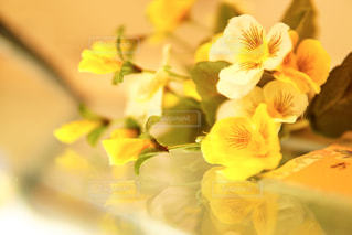 花,フラワー,黄色,黄色い花,flower,イエロー,パンジー,ビオラ