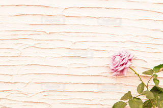 花,白,フラワー,バラ,薔薇,オシャレ,壁,ポストカード,可愛い,パステル,ローズ,ホワイト