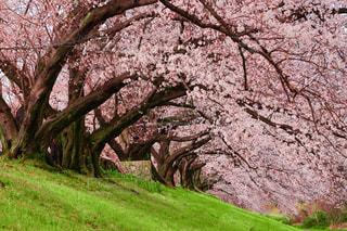 木のクローズアップの写真・画像素材[3076219]