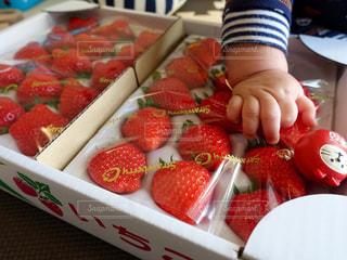 赤,果物,ストロベリー,博多,イチゴ,あまおう,小包,旬の果物