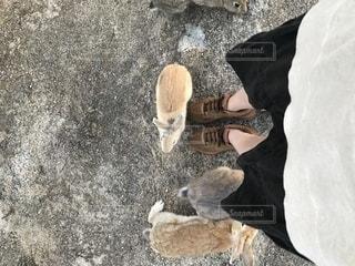 地面に横たわって鳥の写真・画像素材[1840161]