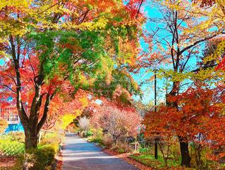 色鮮やかな紅葉の写真・画像素材[1685696]