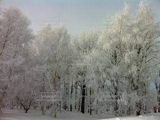マイナス20度の世界。空気も森も凍ります。の写真・画像素材[1732714]