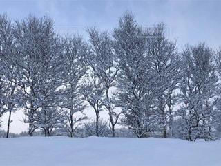 雪に覆われた木、マイナス11度の世界、石狩郡答弁町の写真・画像素材[1764651]