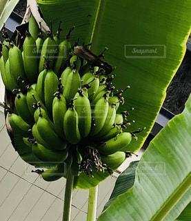 緑,葉っぱ,バナナ