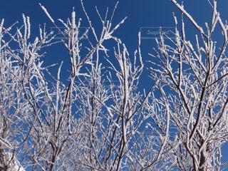 マイナス20度の朝は寒いけどきれいよ!の写真・画像素材[1775046]
