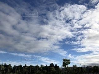 風景,空,屋外,緑,晴れ,青空,北海道,樹木,お散歩,日中