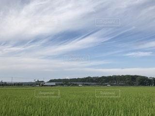 風景,空,屋外,緑,晴れ,青空,北海道,田んぼ,お散歩