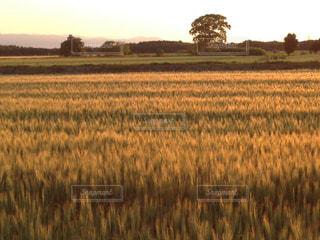 晴れた日の夕方のお散歩の写真・画像素材[2279961]