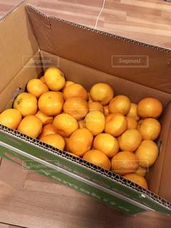 冬,オレンジ,果物,みかん,新鮮,高知,ダンボール,フレッシュ,蜜柑,ミカン,山北みかん