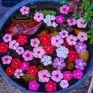 祇園の道端アートの写真・画像素材[1690349]
