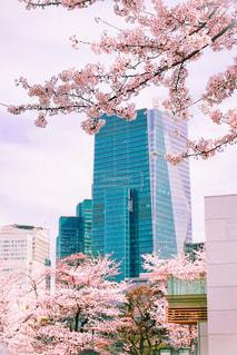 都会の桜並木の写真・画像素材[1791512]