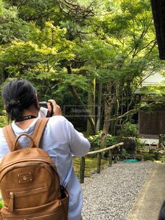 奈良の風景を激写の写真・画像素材[1853628]