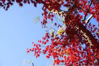 秋の見上げた空の写真・画像素材[1861288]
