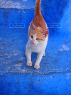青い街の子猫の写真・画像素材[1697932]