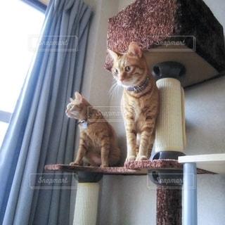 兄弟猫の写真・画像素材[2488529]