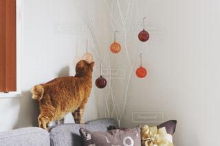 猫と赤いオーナメントの写真・画像素材[2507767]