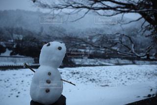 雪の上に座っている鳥カバー フィールドの写真・画像素材[1752314]