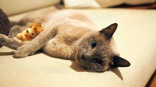 ベッドに横たわる猫の写真・画像素材[2311277]